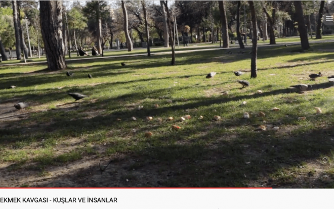 Ekmek Kavgasından Kuş Seslerine – Kuşlar ve İnsanlar